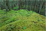 Moss and Tree Trunks, Reginald Hill, Salt Spring Island, British Columbia, Canada