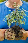 Senior man holding seedling in garden, close-up of plant