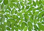 Un grand nombre de feuilles (image de l'écologie)