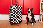 Chien et valise à pois