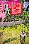 Blanchisserie et peluche chien accroché aux lignes extérieures sur live chien