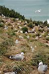 Royal Albatros Centre, Dunedin, péninsule d'Otago, île du Sud, Nouvelle-Zélande, Pacifique