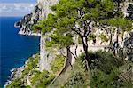 Falaises de Capri ville, île de Capri, baie de Naples, Campanie, Italie, Europe