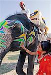 Femme en sari coloré avec un éléphant rituelles peinte à Jaipur, Rajasthan, Inde, Asie