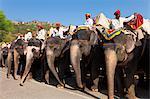 Éléphants en attente pour transporter les touristes à Amber Fort près de Jaipur, Rajasthan, Inde, Asie