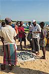 Négociation sur le prix du poisson fraîchement pêché sur cette plage populaire de surf occupé, Arugam Bay, Province orientale, Sri Lanka, Asie