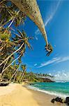 Palmiers à l'extrémité orientale de la plage de surf côte sud whale watch à Mirissa, près de Matara, Province du Sud, Sri Lanka, Asie