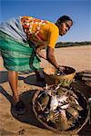 Woman sorting catch, Agonda Beach, Goa, India, Asia