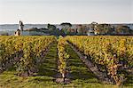 Vignobles près du château de Chinon, Indre-et-Loire, vallée de la Loire, France, Europe