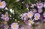 Trauringe unter Blumen