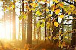 Soleil qui brille à travers les arbres en bois