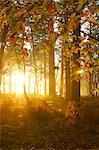 Le soleil qui brille à travers les arbres à l'automne les feuilles en bois