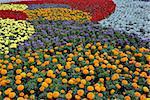 Decorative flower field