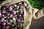 kerelan eggplant