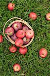 Äpfel in einem Korb auf Gras