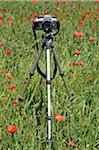 Kamera auf Stativ in Mohn-Feld