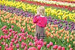Little gilr in a Dutch tulip field.