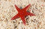 Ghardaqa sea star on sandy sea bed in tropical water