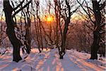 Forêt de hêtres en hiver au coucher du soleil, Kreuzberg, montagnes Rhon, Bavière, Allemagne
