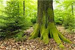 Moss Covered Tree Trunk, Spessart, Bavaria, Germany