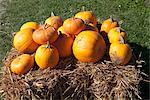 Orange pumpkins on a bale of hay