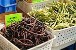 Haricots biologiques de pourpres et verts au marché fermier