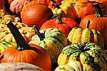Various types of pumpkins (macro zoom)
