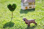 Dog Toy On Grassy Field