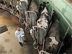Veterinarian working in milking parlor