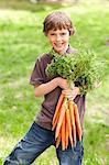 Garçon tenant une botte de carottes fraîches