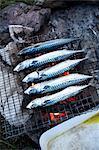 Mackerel a barbecue