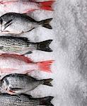 Assortierte ganze Frische Fische auf Eis