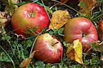 Trois pommes, couché dans l'herbe