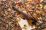 Violon et feuille de musique dans les feuilles mortes