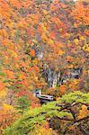 Train traversant le pont dans la forêt, l'automne