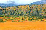 Beautiful Landscape In Autumn, Autumn Trees