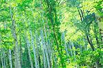 Des bois au printemps