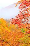 Autumn Trees Scene At Morning