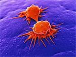 Krebszellen, die Aufteilung, Computer-Grafiken.
