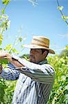 Mexican Vineyard Worker