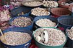 Fresh garlic on the market