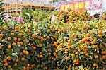 Citrus fruit, flower market, Hong Kong