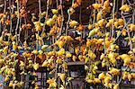 Solanum Mammosum, flower market, Hong Kong
