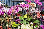 Orchid, flower market, Hong Kong