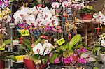 Orchidée, marché aux fleurs, Hong Kong