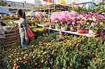 Menschen einkaufen im Flower-Markt, Tsuen Wan, Hong Kong