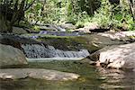 Cours d'eau traversant des bois
