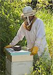 Beekeeper Opening Hive