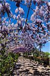Covered Walkway, Bardini Gardens, Florence, Tuscany, Italy