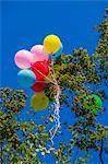 Ballons colorés pris dans un arbre